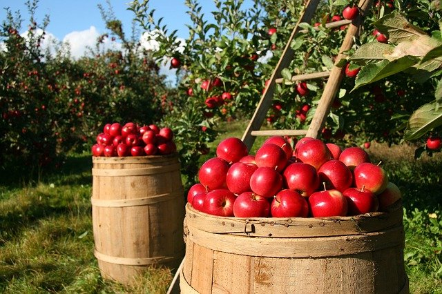 Organic Gardening Advice To Make Your Garden Thrive